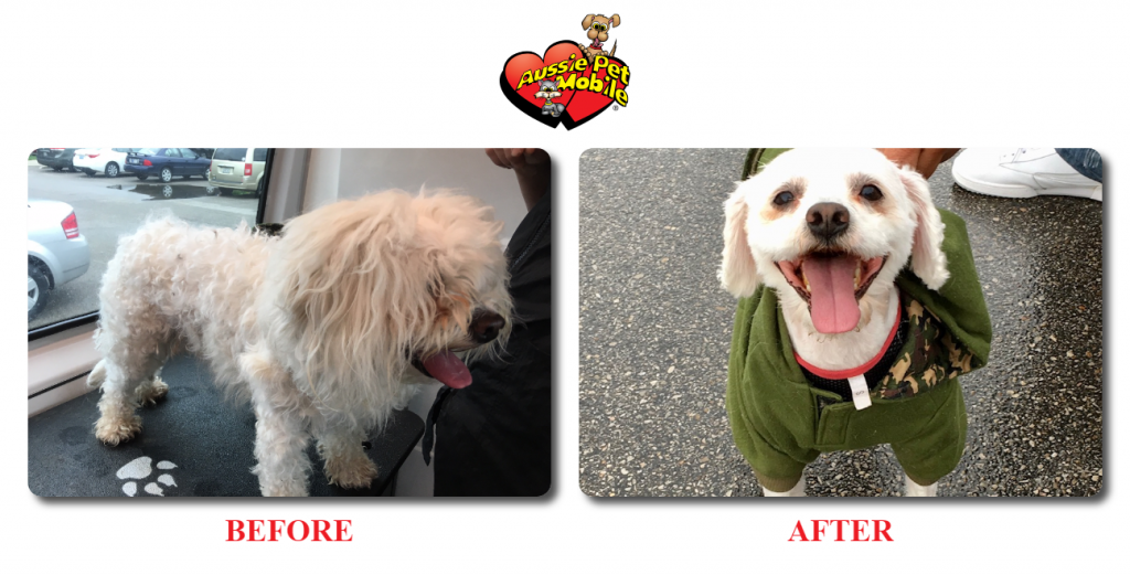 Dog Before and After Groom