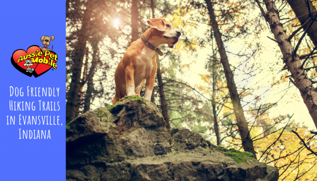 Dog Friendly Hiking Trails in Evansville, Indiana