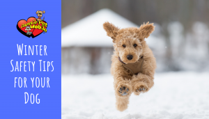 Winter safety tips for your dog