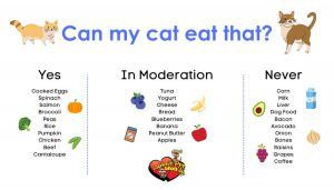 Can My Cat Eat That?